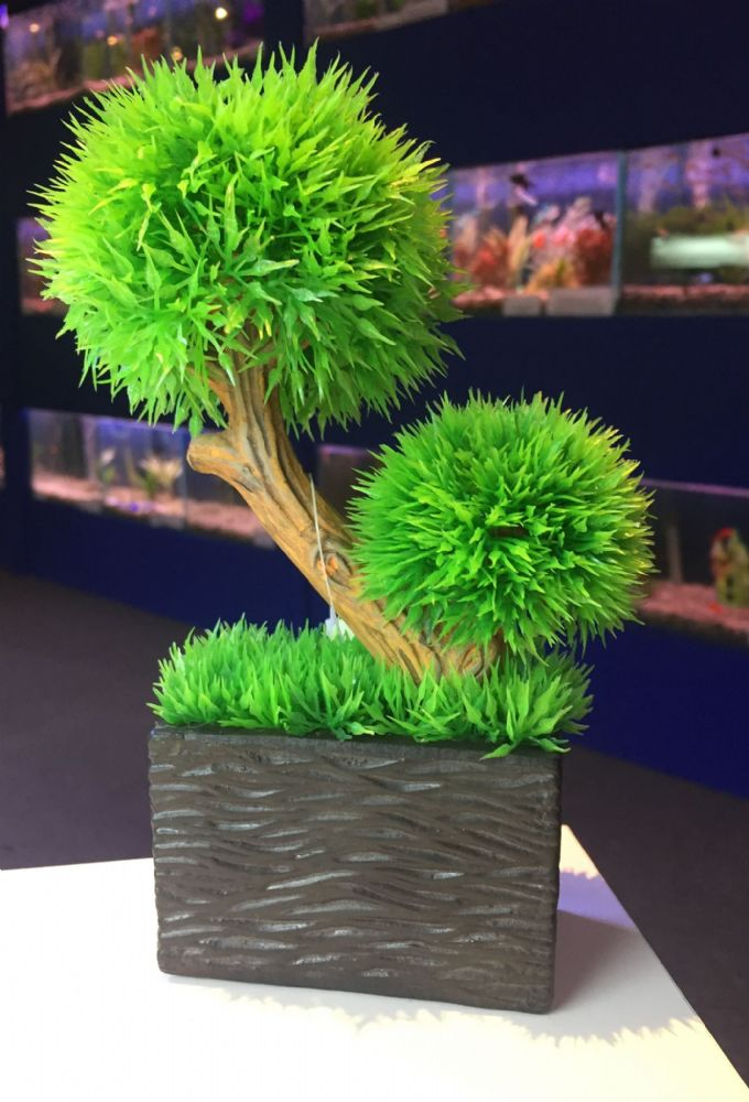 18cm Potted Box Brush Aquarium Plant